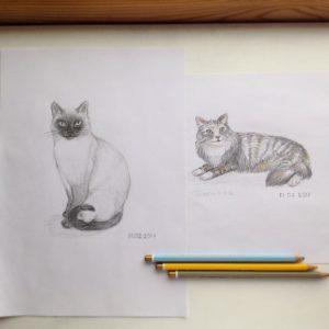 наброски кошек карандашом