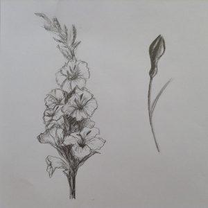 набросок цветок карандашом