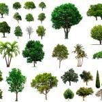 trees-on-white-background-set