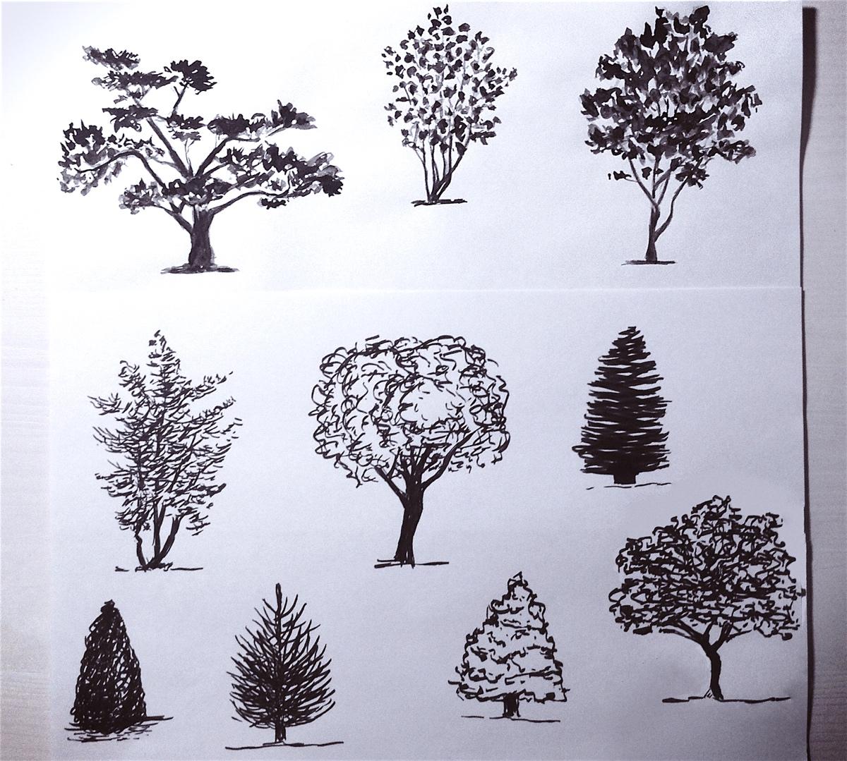 Как рисовать деревья акварелью к