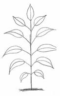 рисуем деревья. упражнения для рисования