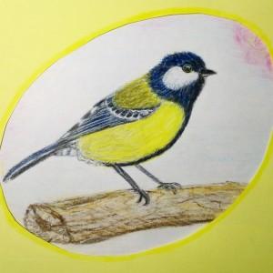 синичка цветными карандашами