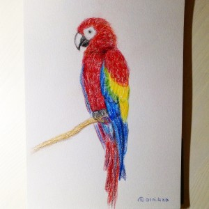 попугай цветными карандашами