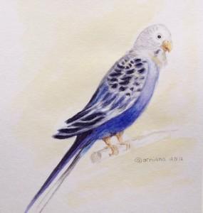Попугай акварелью