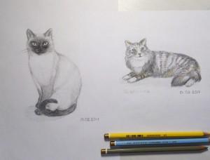 коты карандашом