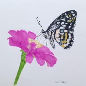 Бабочка на цветке маркерами