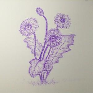 цветы пастельным карандашом