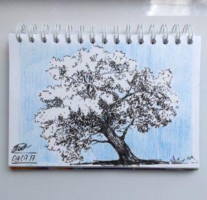 скетч дерева брашпеном