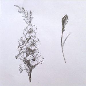 набросок цветов карандашом