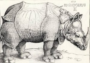Дюрер. Носорог